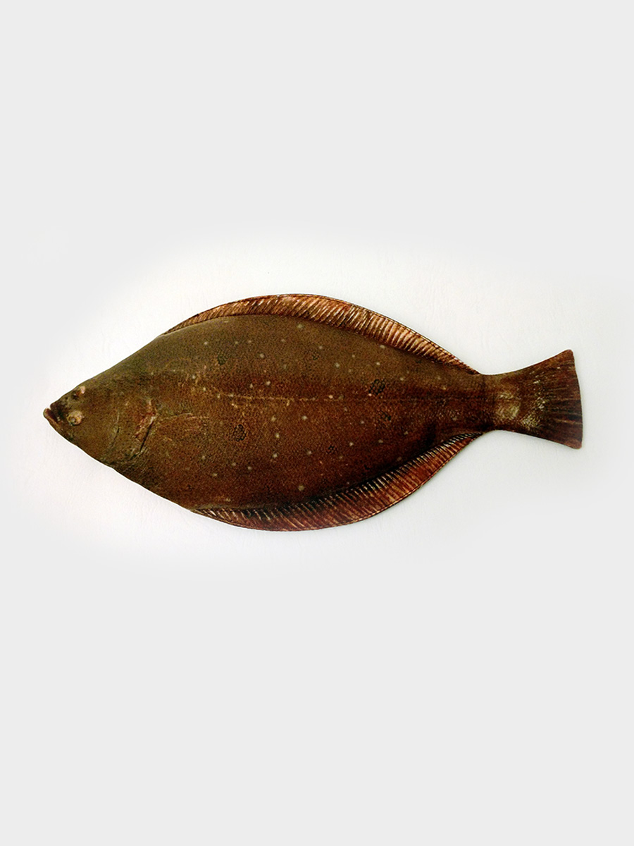 Flat Fish Pencil Case